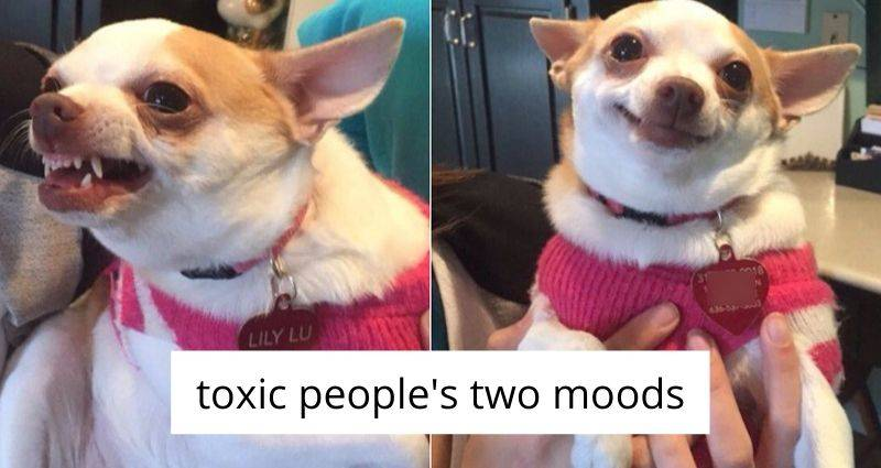 toxic people's two moods (angry dog and happy dog)