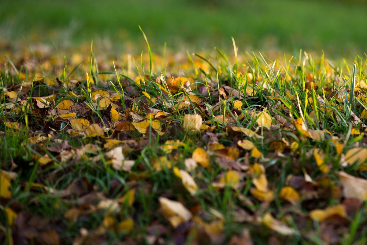 Colorful autumn leaves litter the grass.