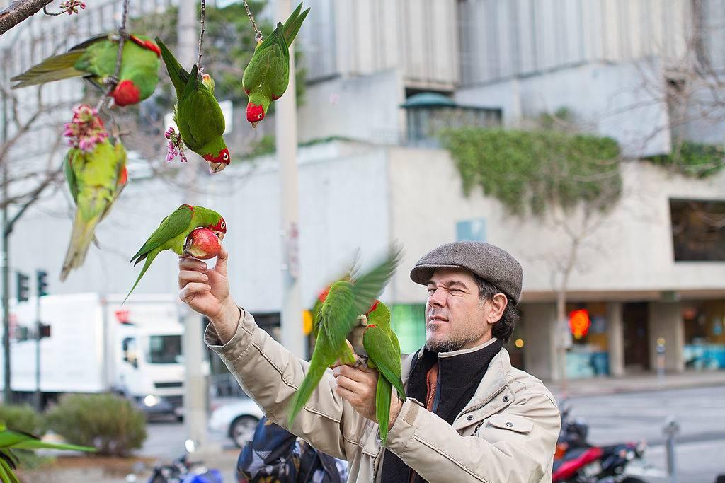 parrots san francisco