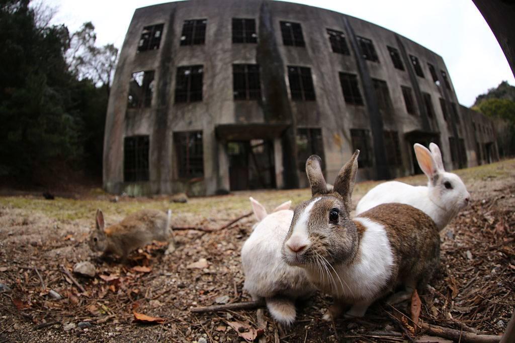 bunnies in japan