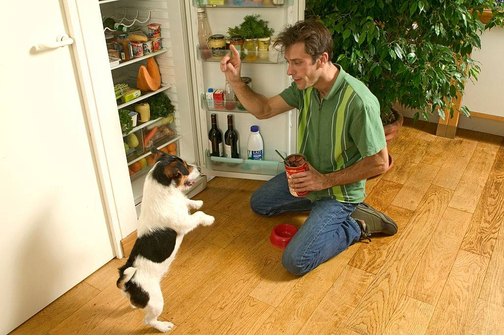 A man instructs his dog to stand on its hind legs.