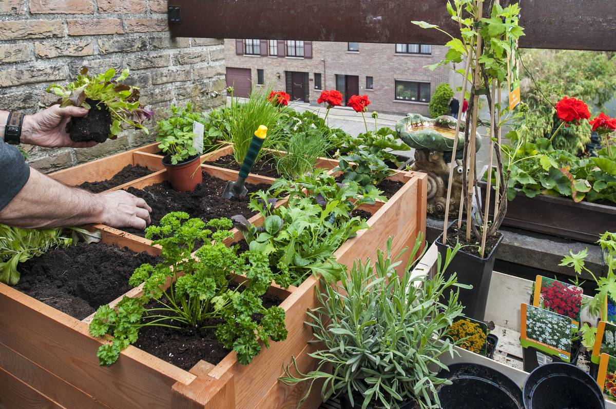 A person plants herbs, vegetables, and flowers in a box on the balcony.