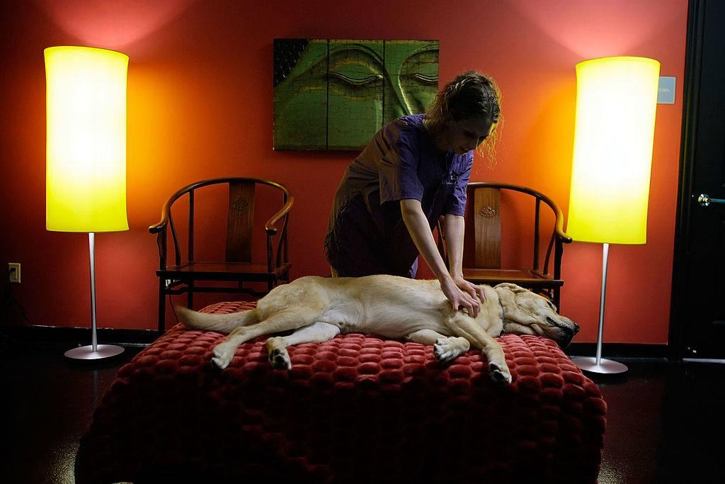 A woman gives a dog a massage.