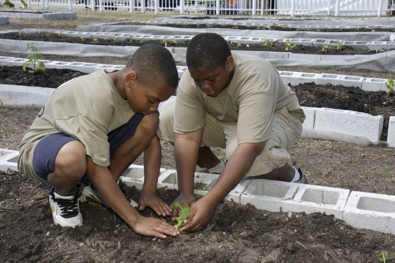 Two boys plant flowers in a community garden.
