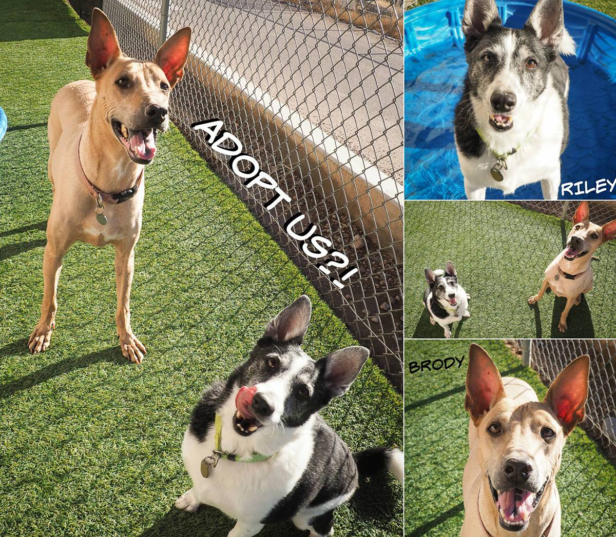 Maricopa-County-Animal-Care-and-Control-25981