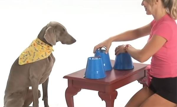 A woman plays the shell game with her dog.