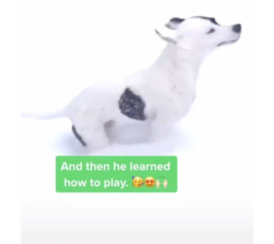 and then he learned how to play