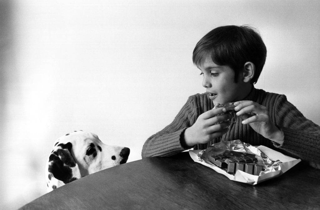 a boy keeping chocolate away from a dalmatian