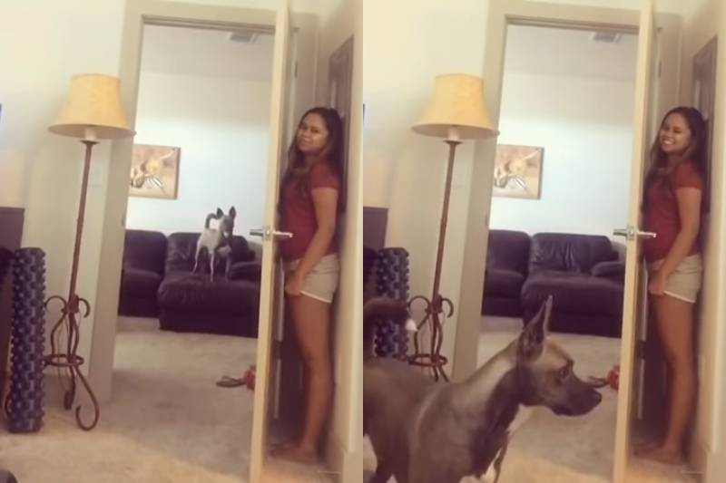 A woman hides behind her bedroom door while her dog looks for her.