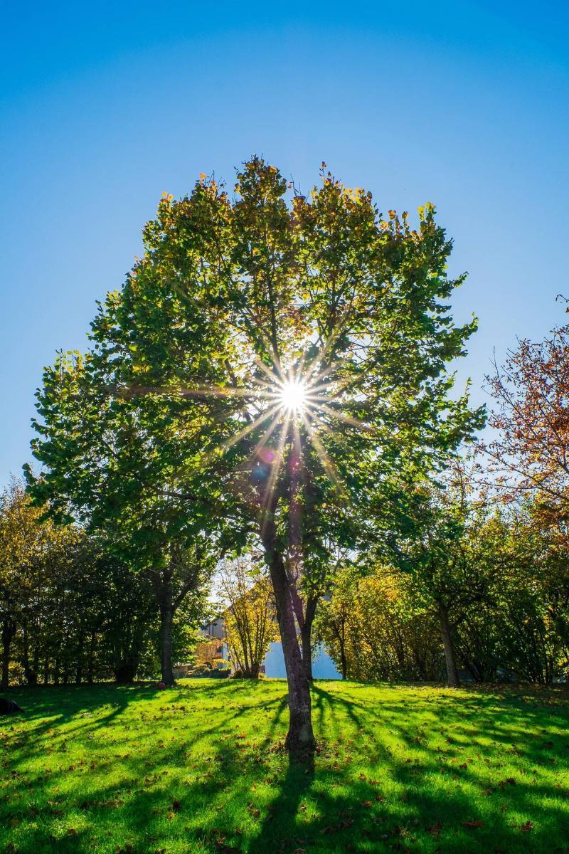 green tree under blue sky