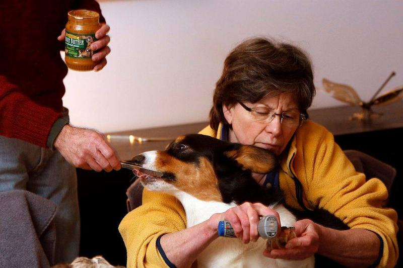 a dog being fed peanut butter from a jar