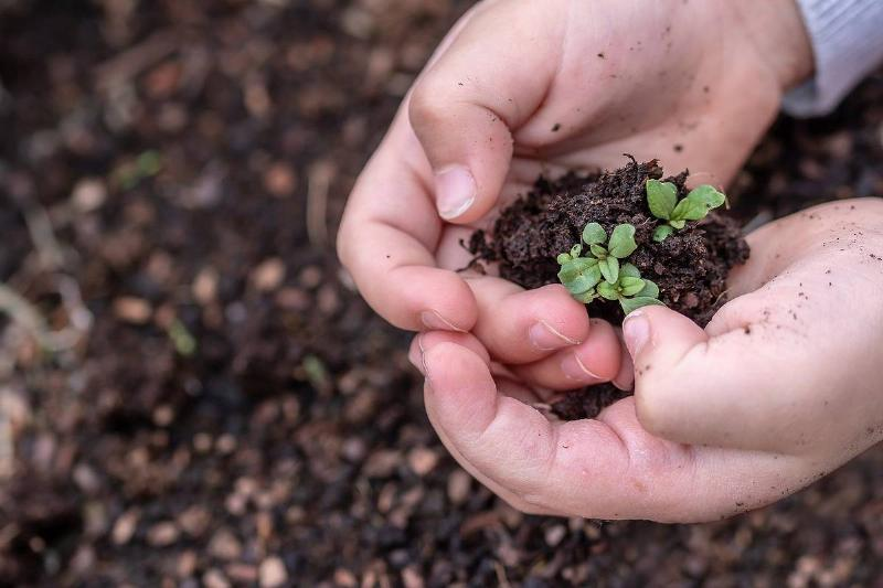 A child holds sprouted seedlings.
