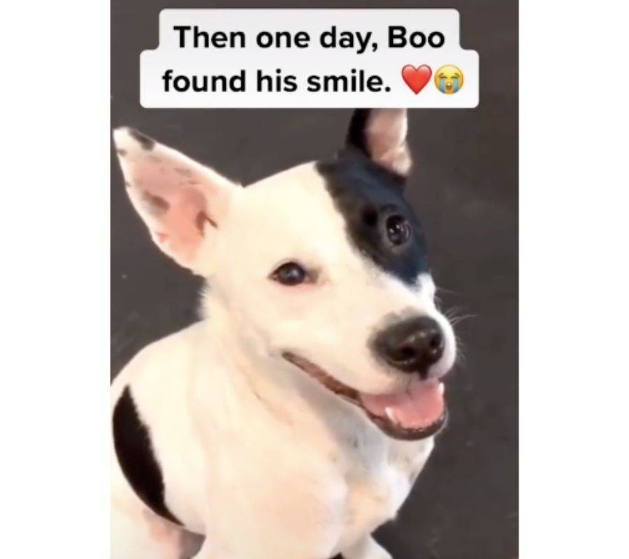 then one day boo found his smile