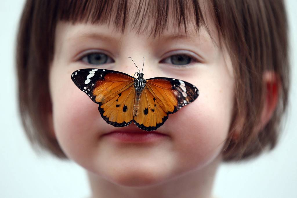 A butterfly sits on a little girl's nose.