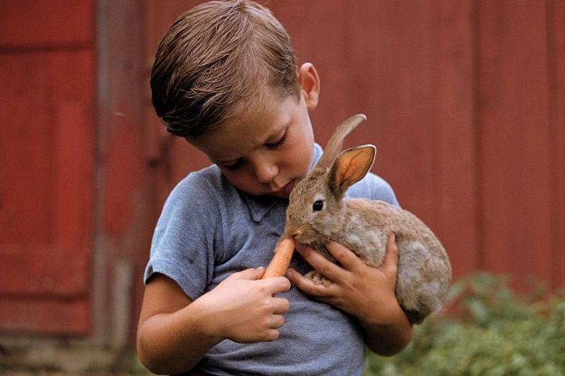 A boy holds his pet rabbit while feeding it a carrot.
