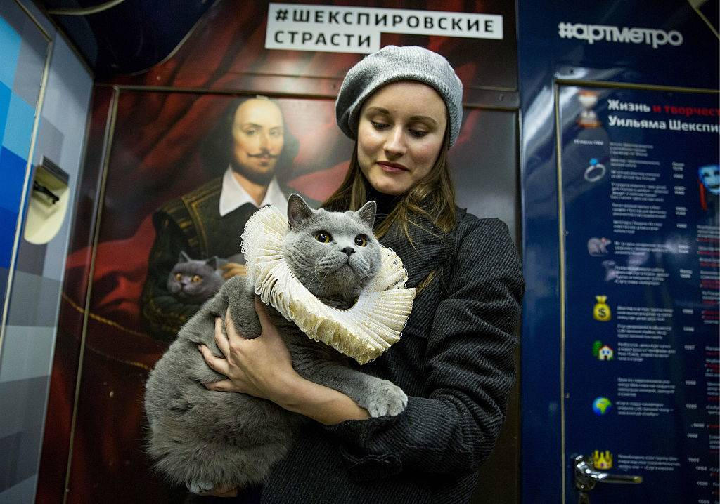 A woman holds her gray cat.