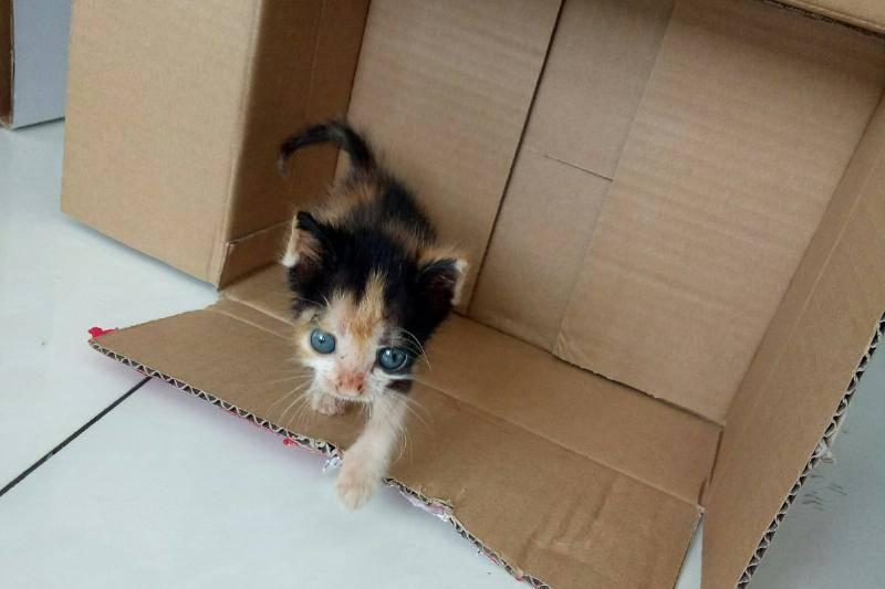 Sansa-crawling-out-of-a-cardboard-box-36240