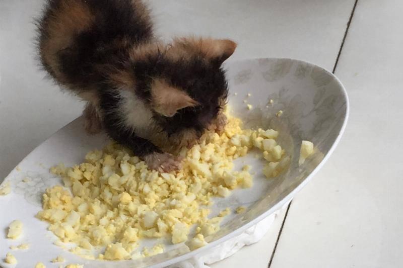 Sansa-eating-scrambled-eggs-72018