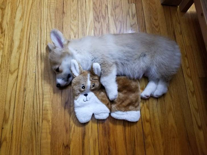 animals-with-toys-1