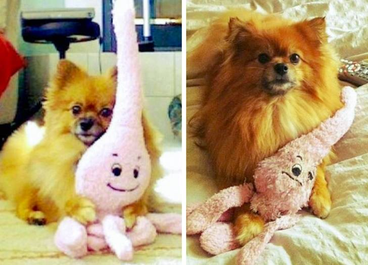 animals-with-toys-12