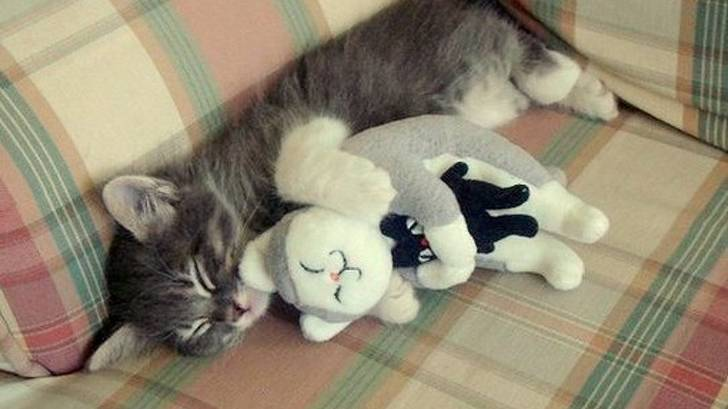 animals-with-toys-7