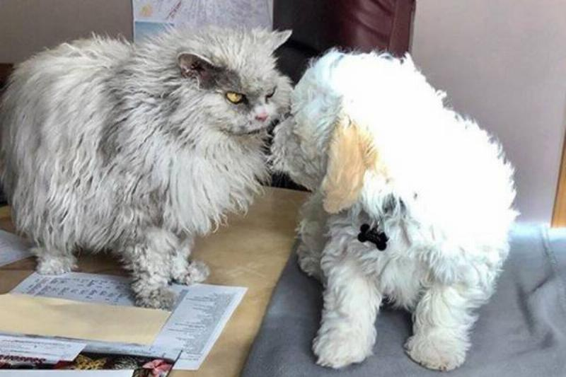 cat-dog-faceoff