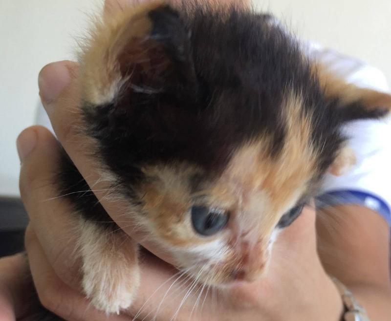 close-up-of-abandoned-calico-cat-21088
