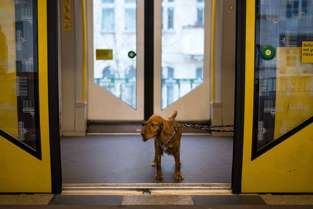 A dog travels by subway