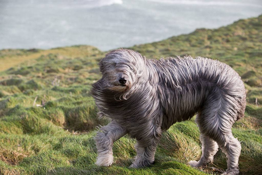dog spinning around in the wind on a grass field