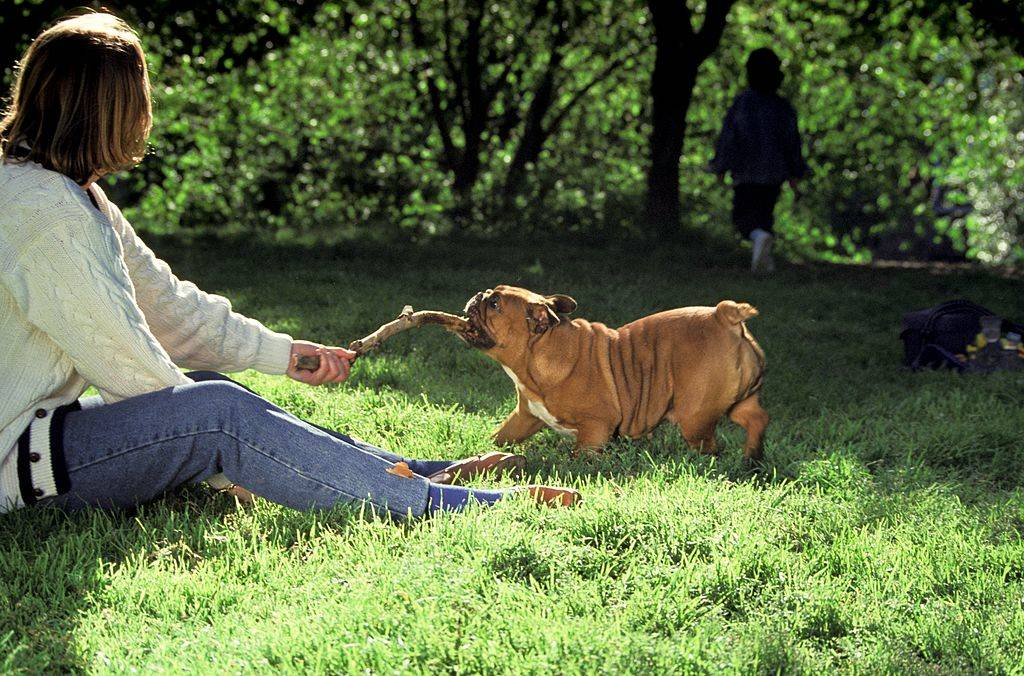 a woman and a bulldog playing tug of war with a branch in the park