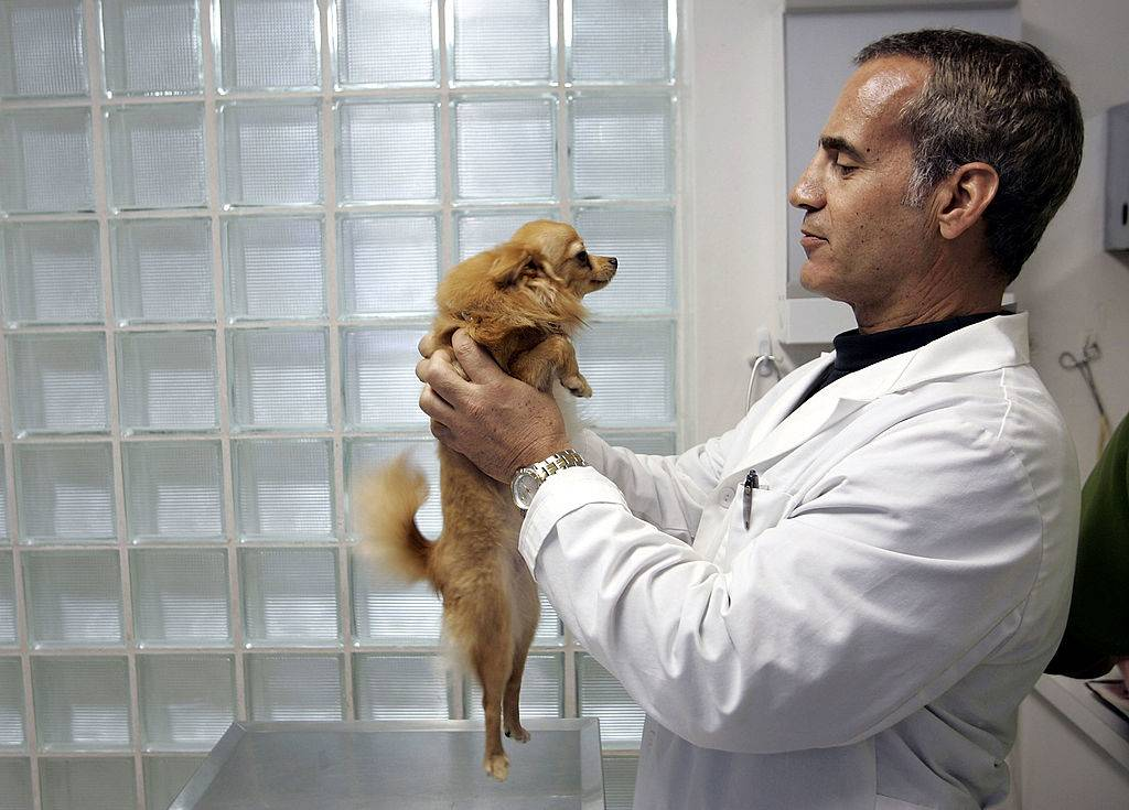 a vet holding up a small dog