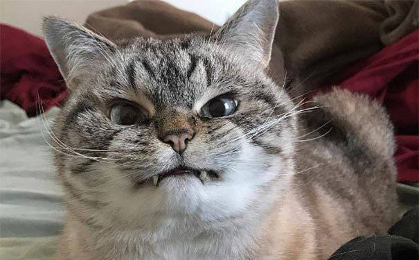 hilarious-cute-angry-animals