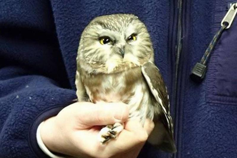 judgmental-owl