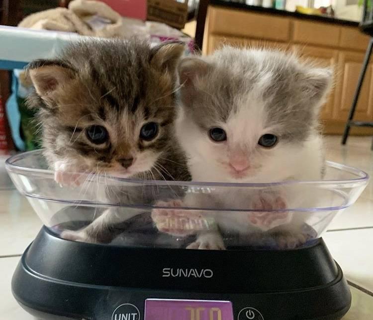 kitten-scale