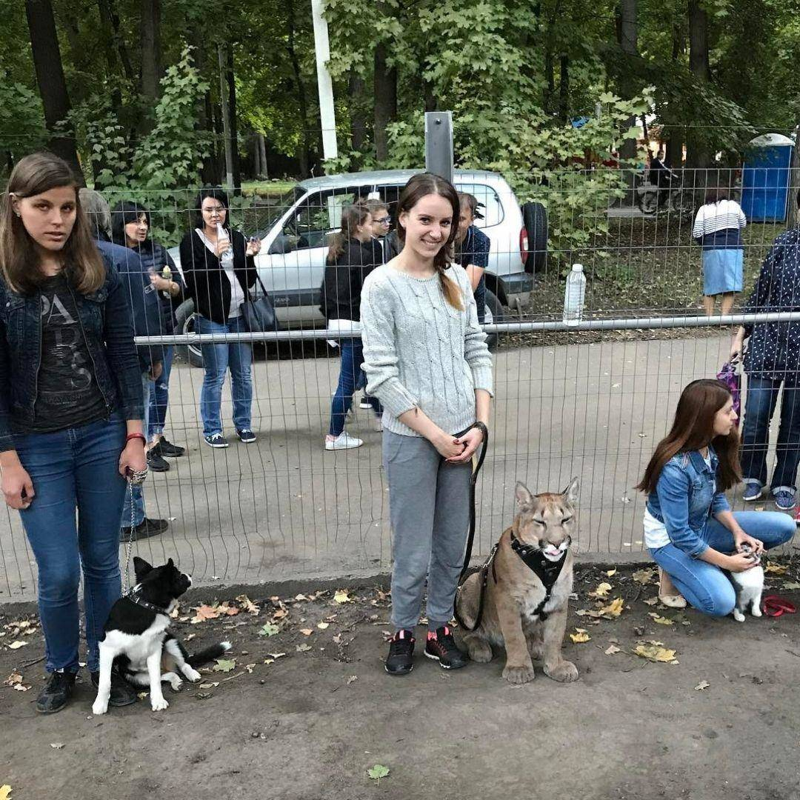 puma-housecat-at-dog-training-class-64912