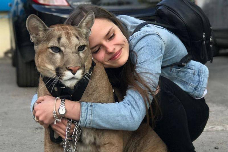 puma-housecat-hug-81509