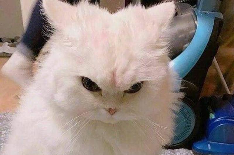tough-cat-01