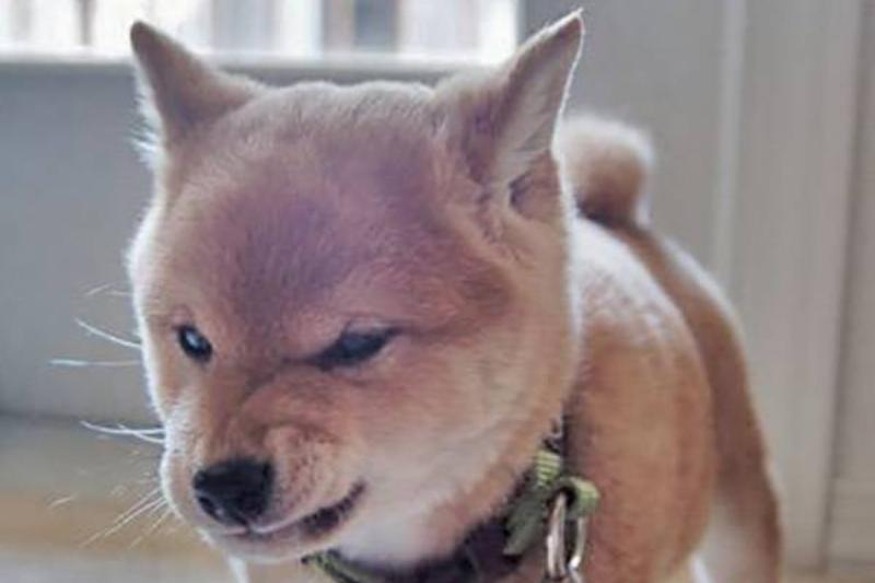 tough-puppy-01