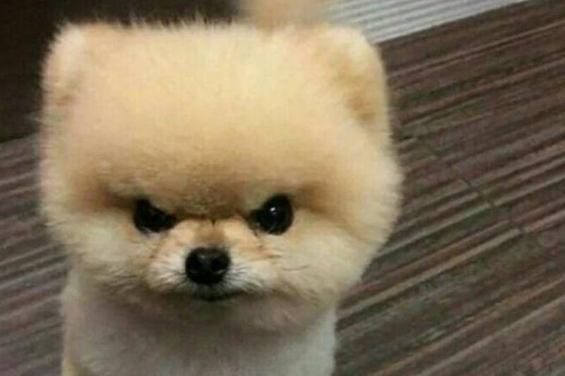 tough-puppy-02
