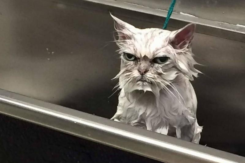 wet-angry-cat-01