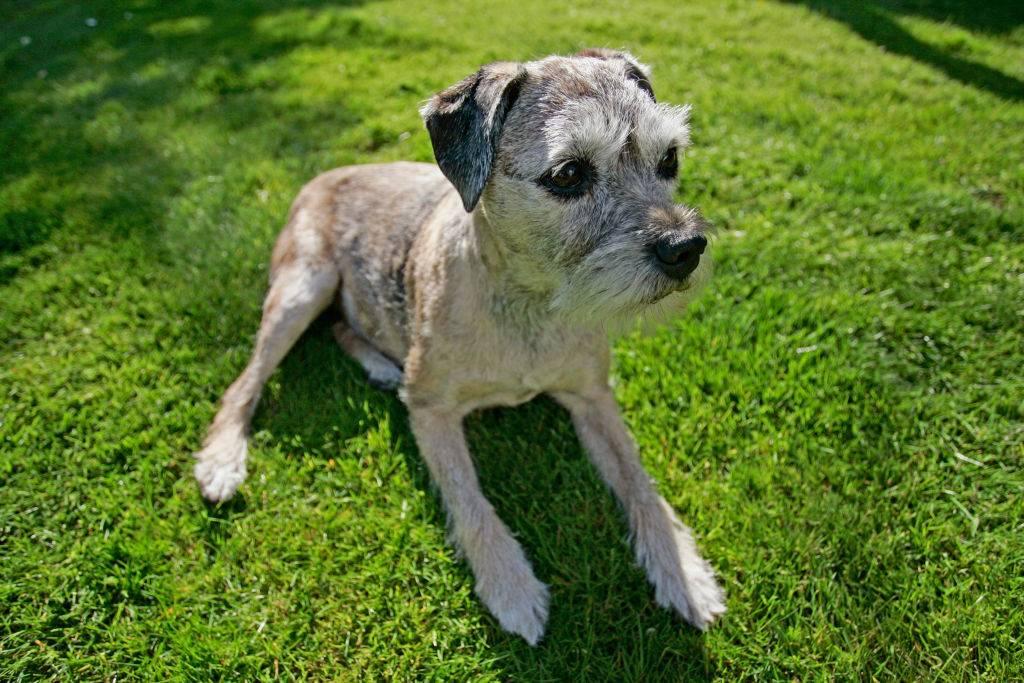 senior-dog-15