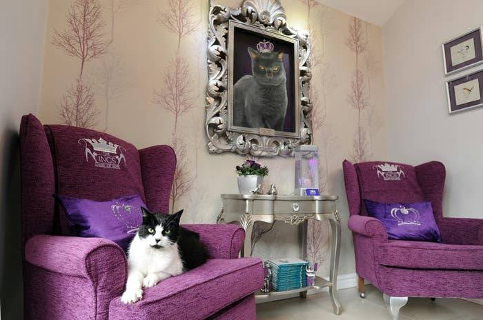 A cat sits on a chair in a cat hotel.