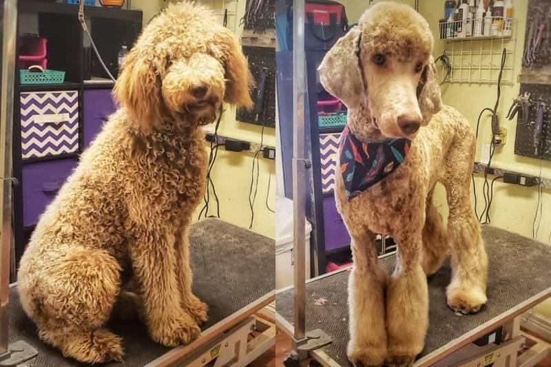 pet-groomer-3a