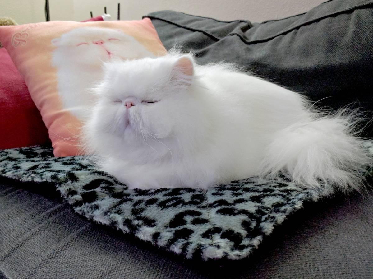 spoiled-cat-21