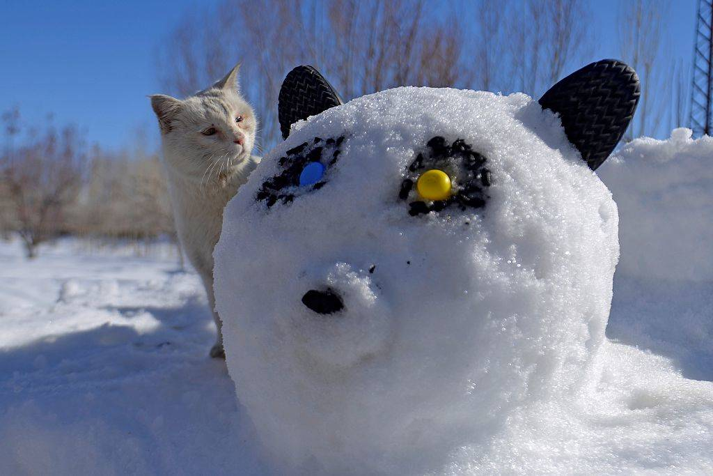 a cat looking at a cat snow sculpture