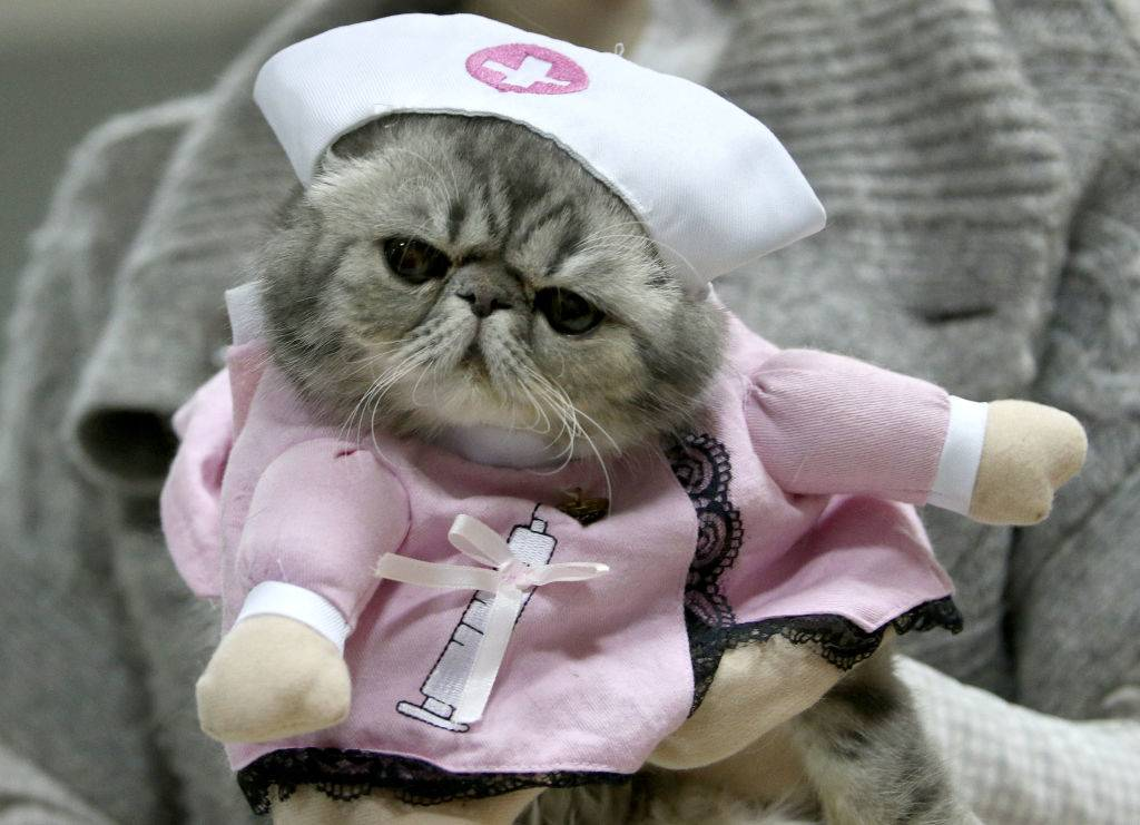 a cat wearing a nurse costume