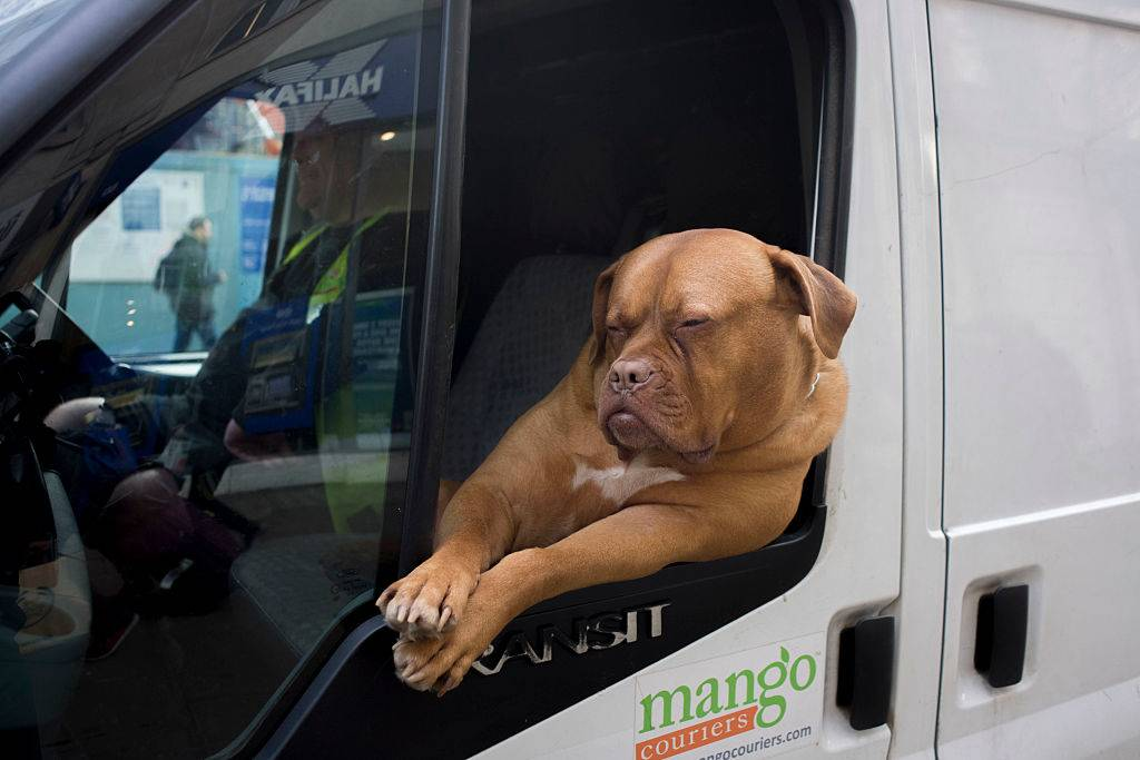 a dog leaning outside a van