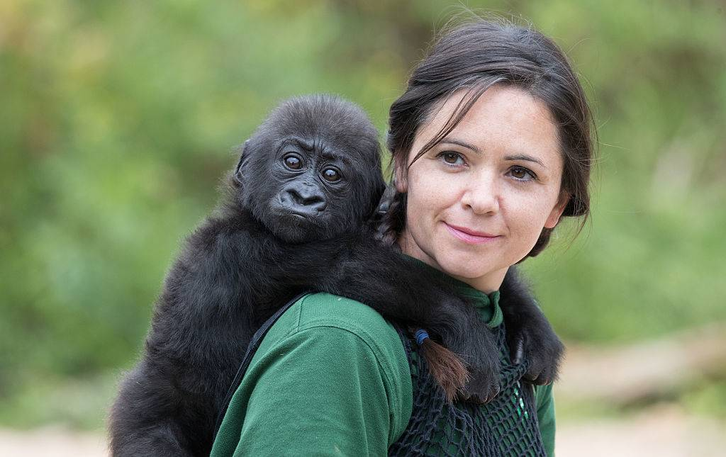 woman holding a baby gorilla on her back
