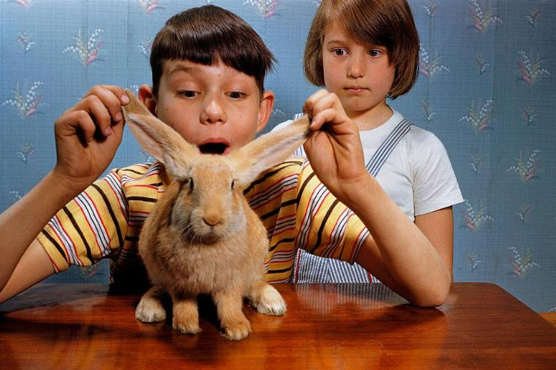 boy holding a rabbit's ears with girl staring angrily behind him
