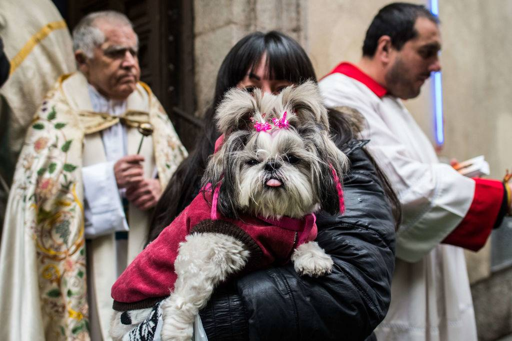 a woman picking up her dog who is sticking her tongue out with a pink jacket and clips